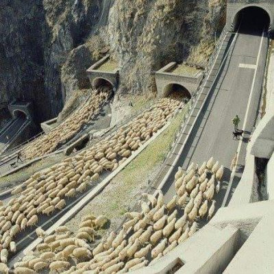 Kaç koyun var? - Komik bir hikaye Çobanın biri de