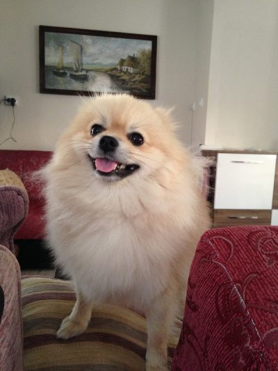 Profil resmimdeki köpeği yakından görmek