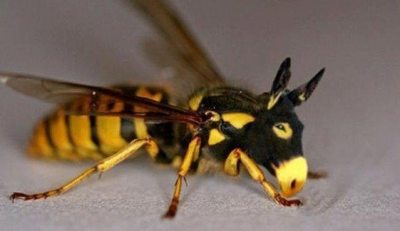 Eşekarısı eşek ve arının çiftleşmesi son