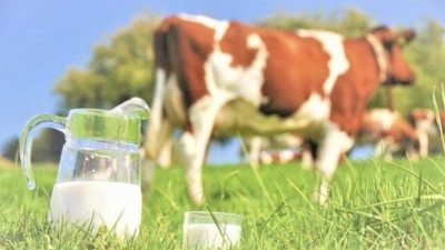 U.S. Raw Milk on the Rise - New Staph St
